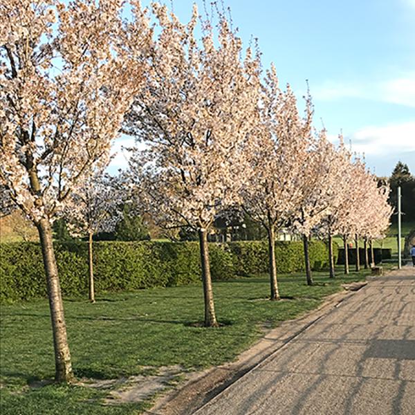 La restauration du «Priory Park» de Reigate